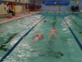 2012swimathon2